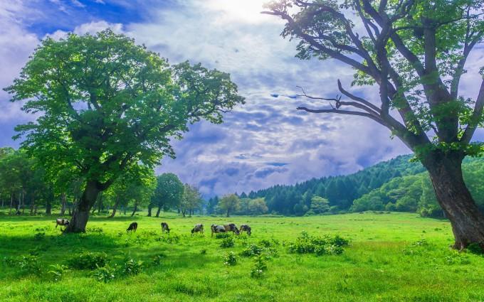 scenery greenlands