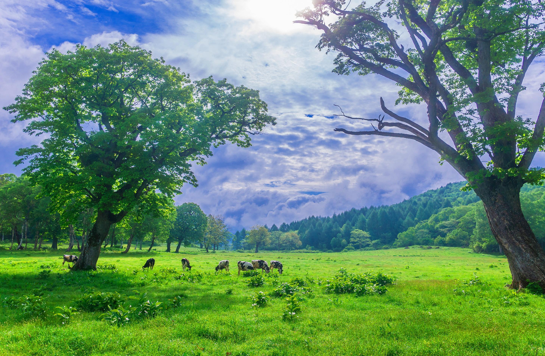 scenery greenlands  Wallpaper