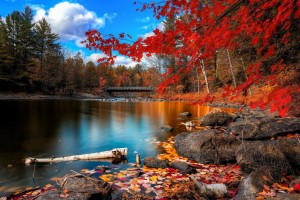 scenic wallpaper autumn