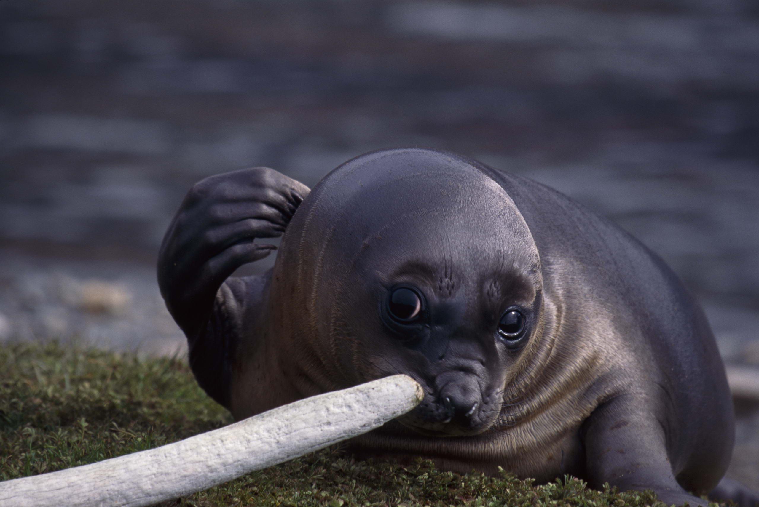 sea lion baby