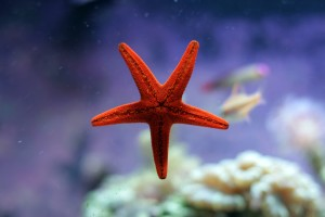 sea star fish beautiful