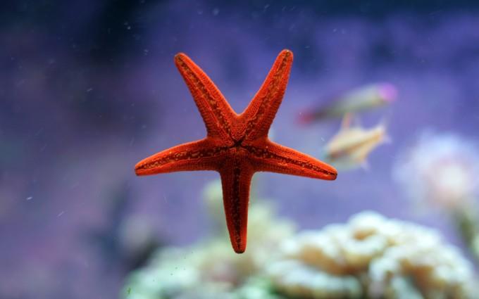 sea star fish beautiful