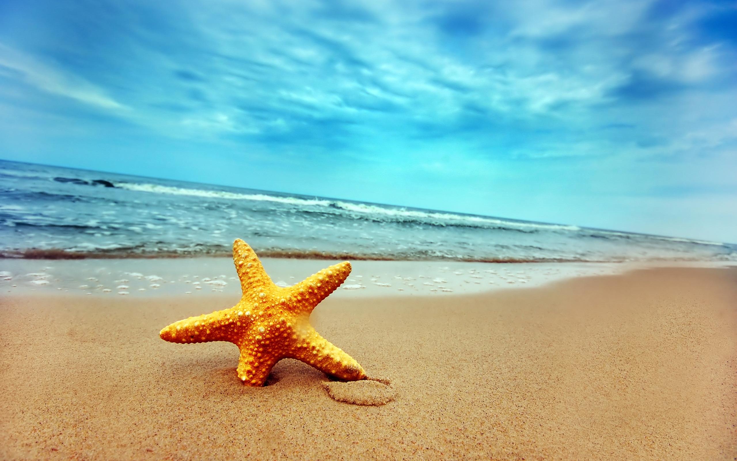 sea star fish hd