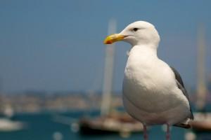 seagulls image