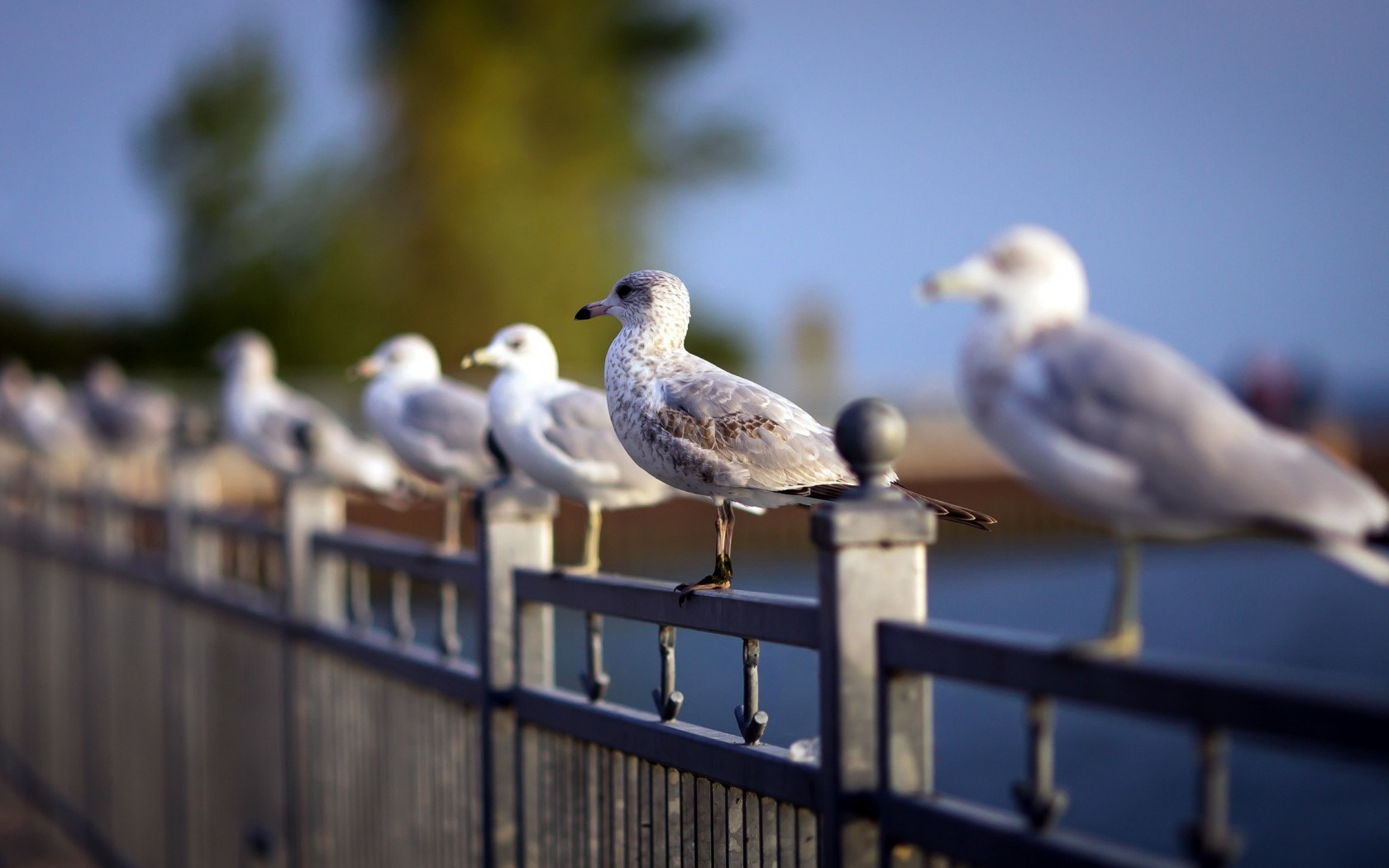seagulls images