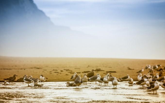 seagulls wallpaper download