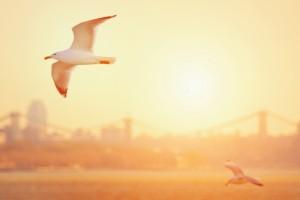 seagulls wallpaper hd