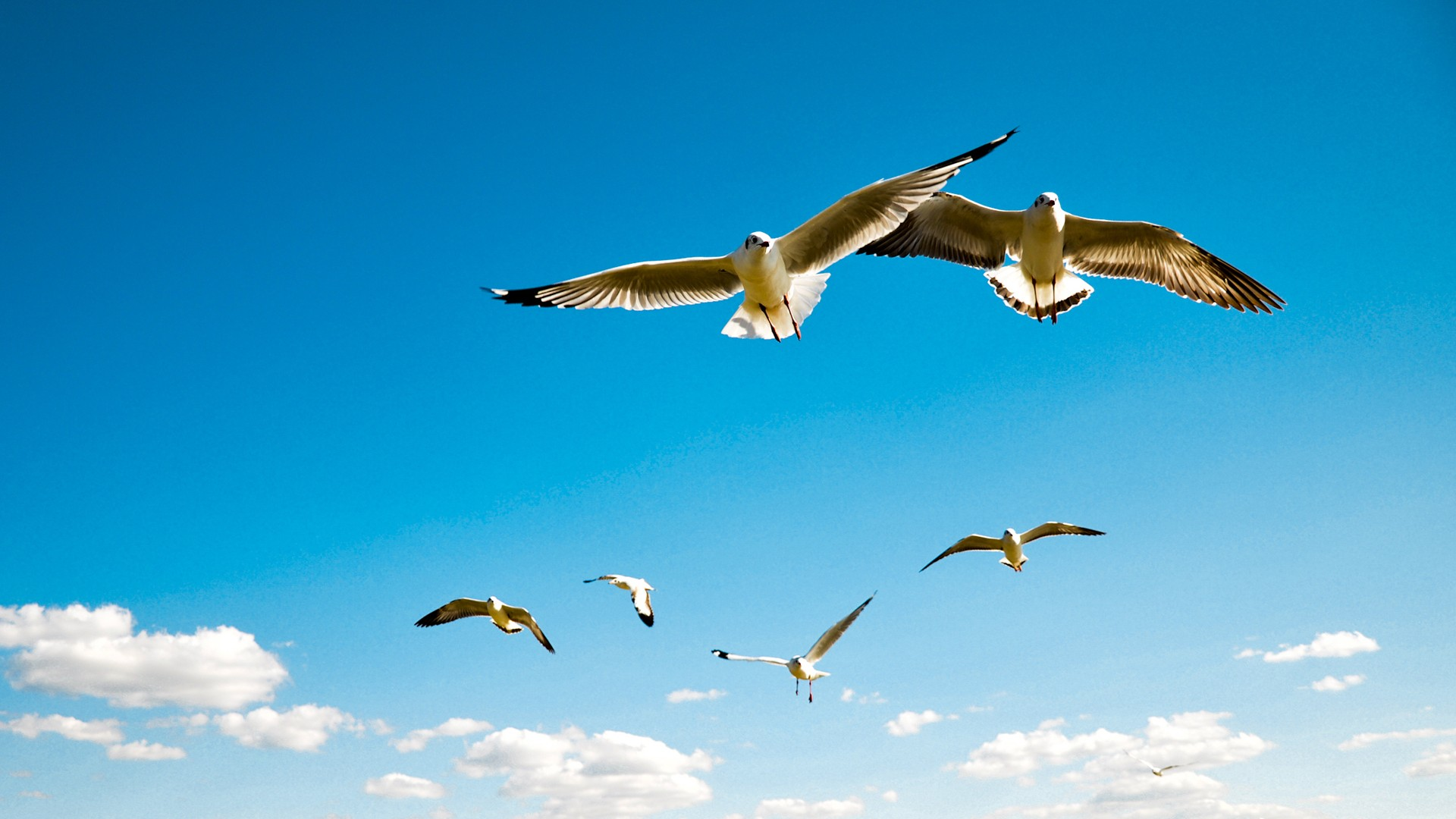 seagulls wallpapers hd