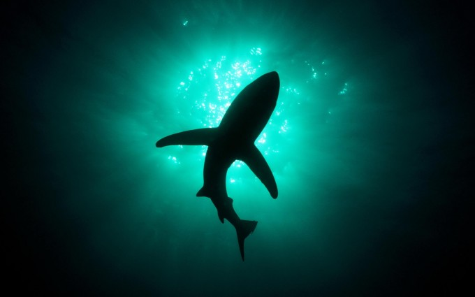 sharks pictures
