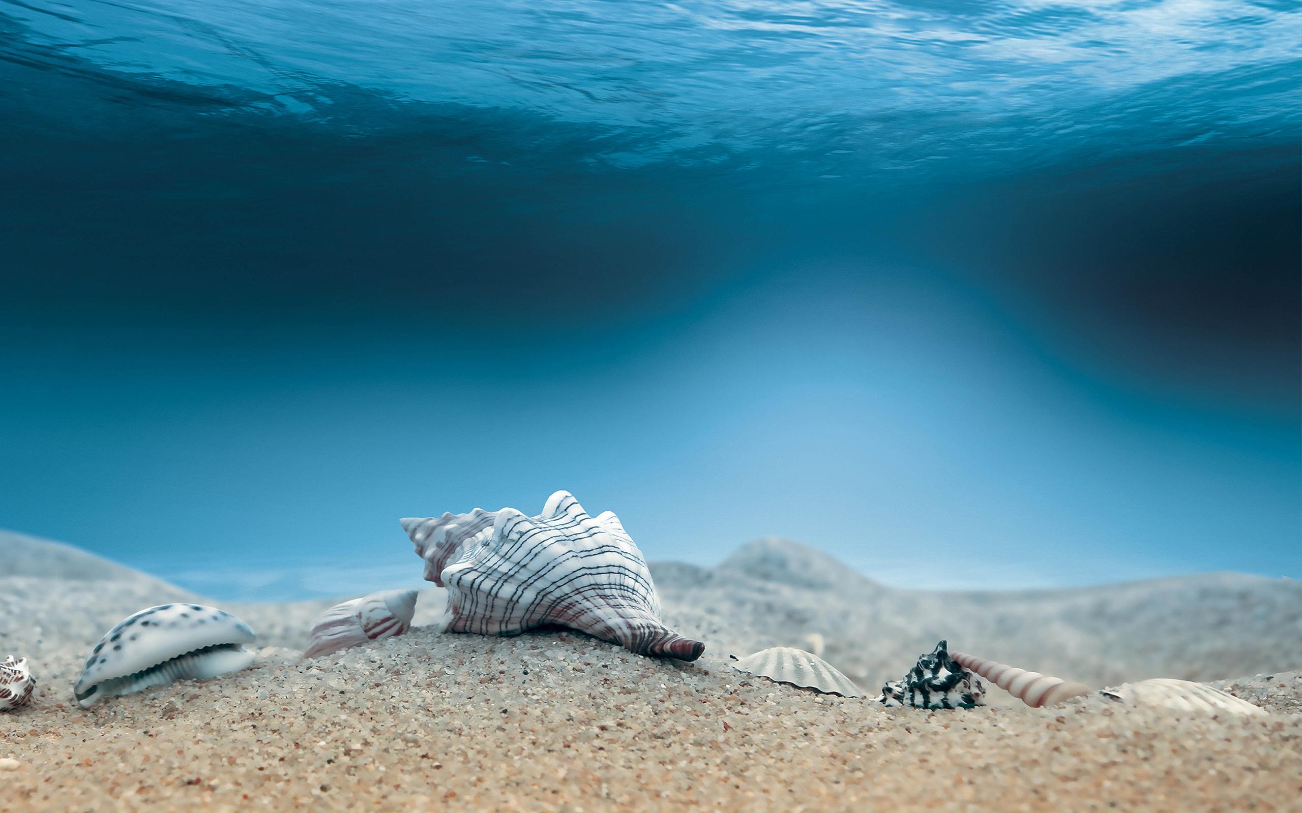 Shells Seabed Wallpaper Hd Desktop Wallpapers 4k Hd