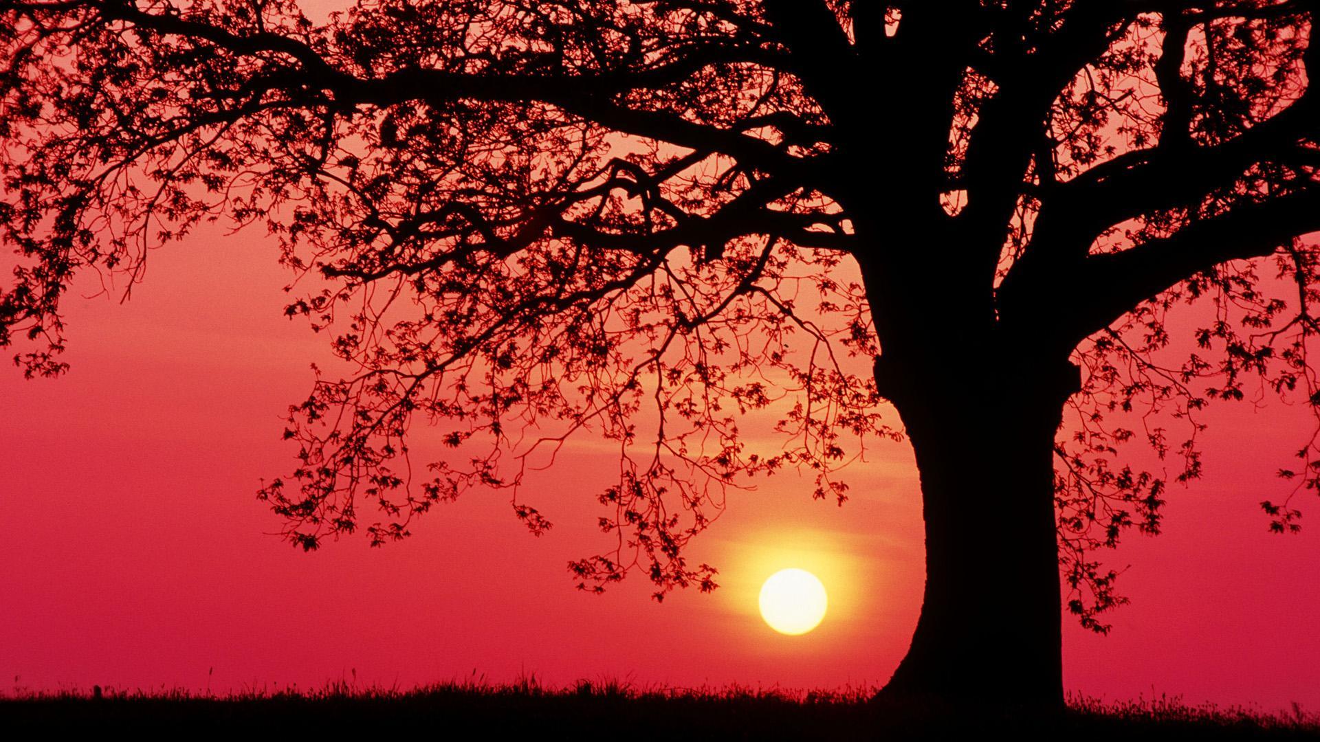 silhouette sunset landscape