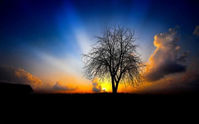 silhouette sunset nature
