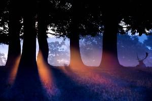 silhouette tree wakkoao