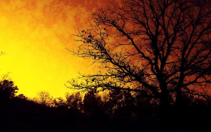 silhouette trees autumn