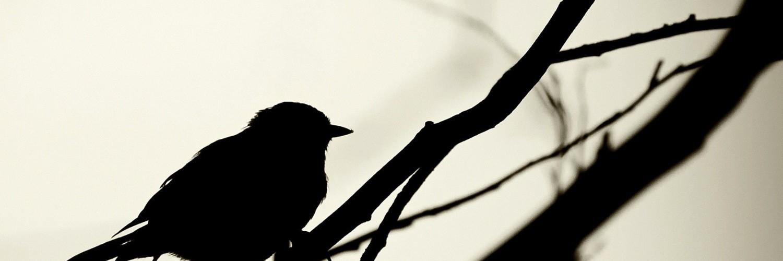 silhouette wallpaper bird hd desktop wallpapers