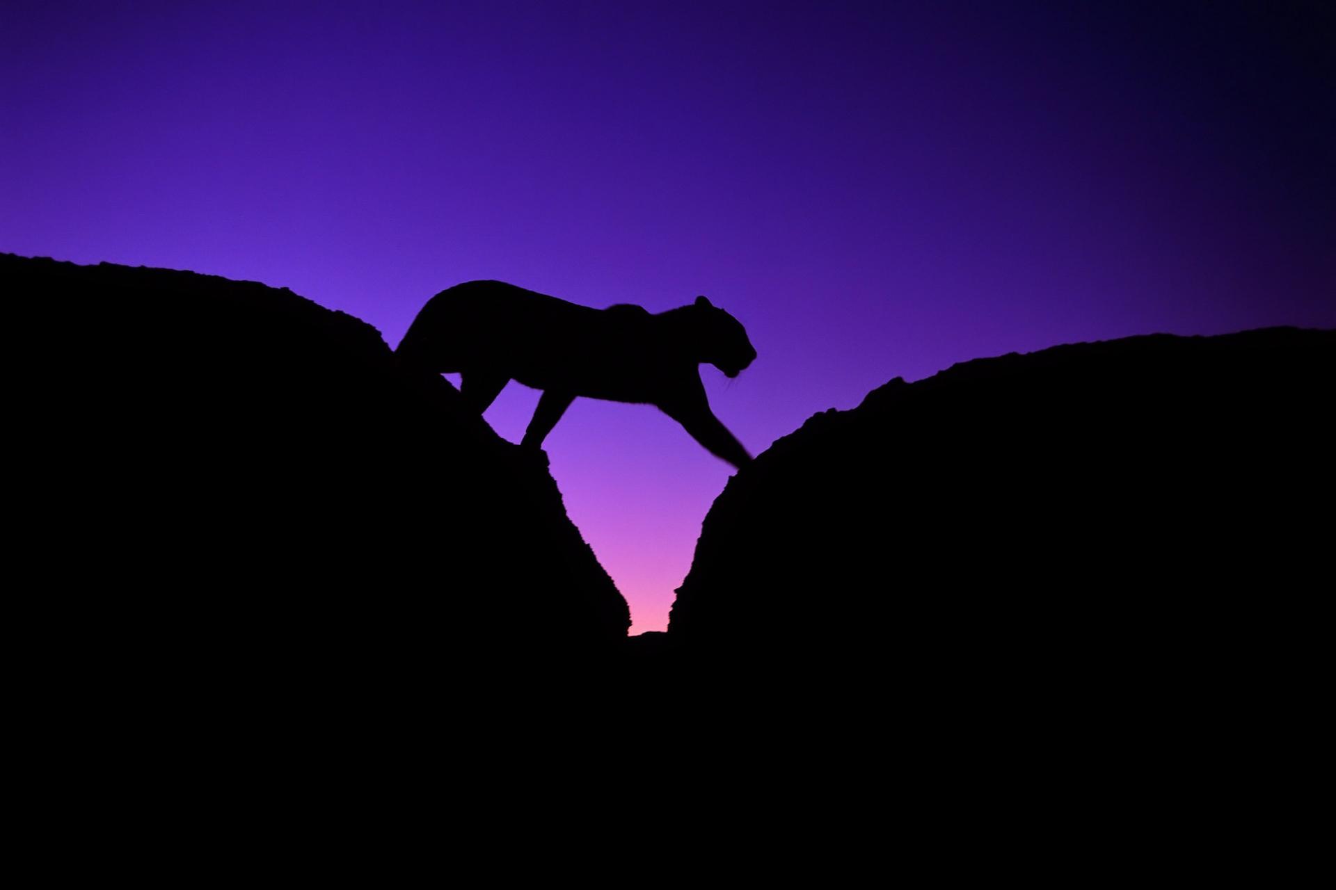 silhouette wallpaper evening