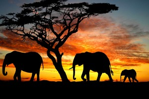 silhouette wallpaper wildlife