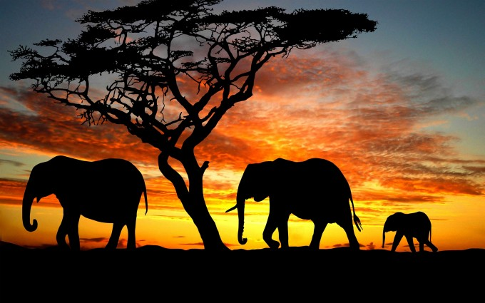 silhouette wallpaper wildlife