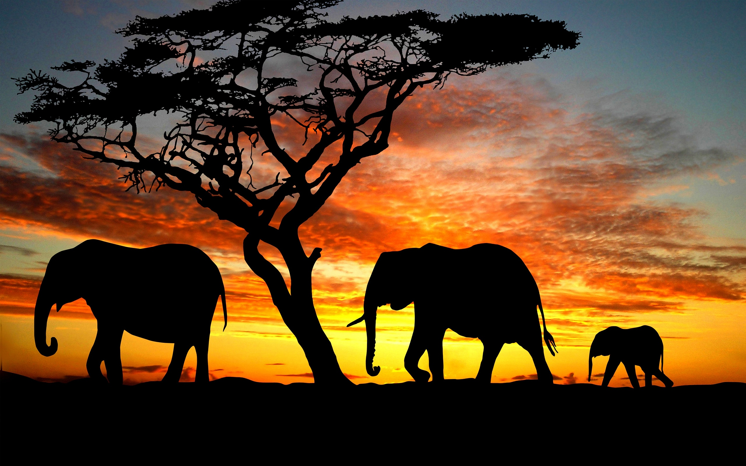 Silhouette Wallpaper Wildlife - HD Desktop Wallpapers