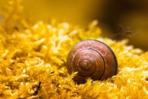 snail image