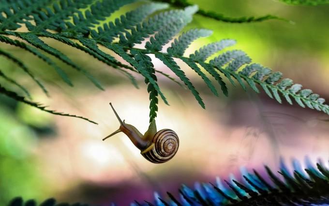 snail images