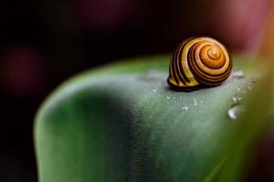 snail nature wallpaper