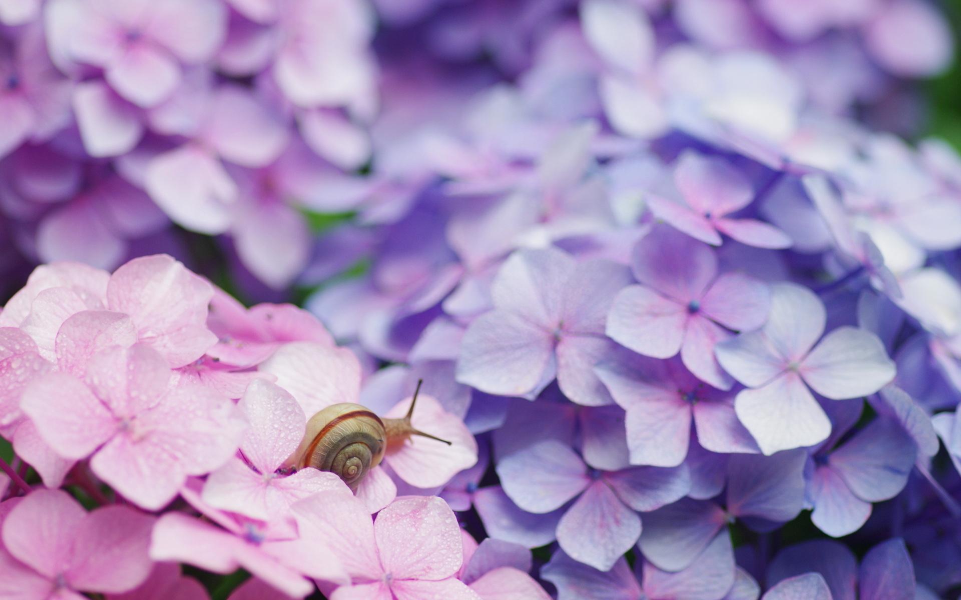 snails images