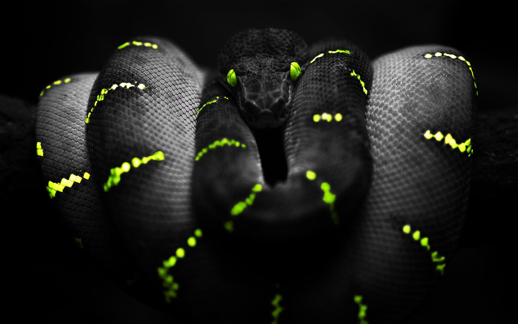 snake hd image