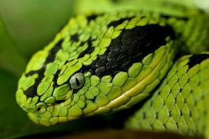 snake hd photo