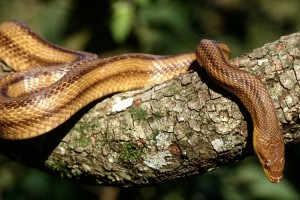 snake hd photos