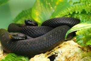 snake images download
