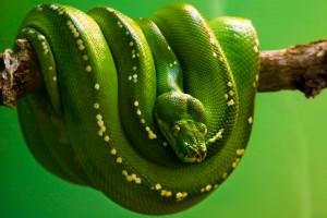 snake images free