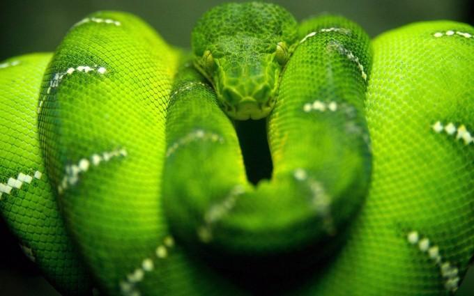snake images hd