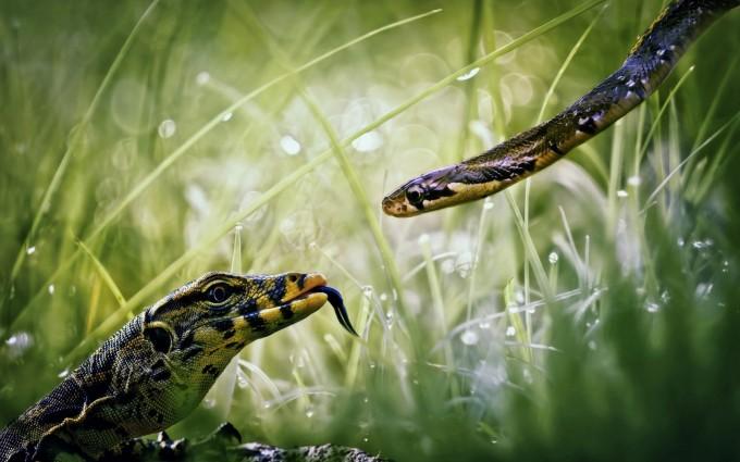 snake photo download