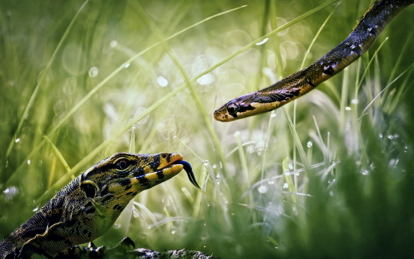 snake photo download