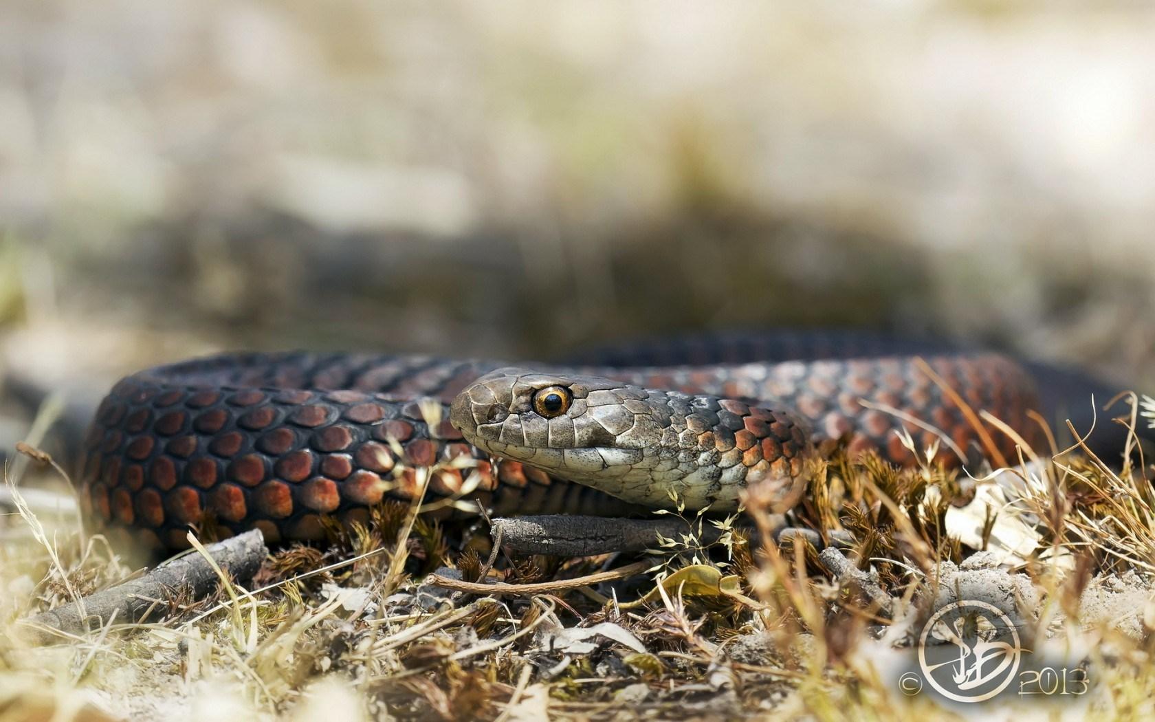 snake photos download