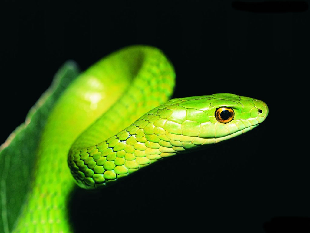 snake photos hd