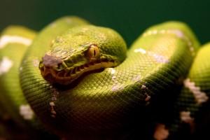 snake pics hd