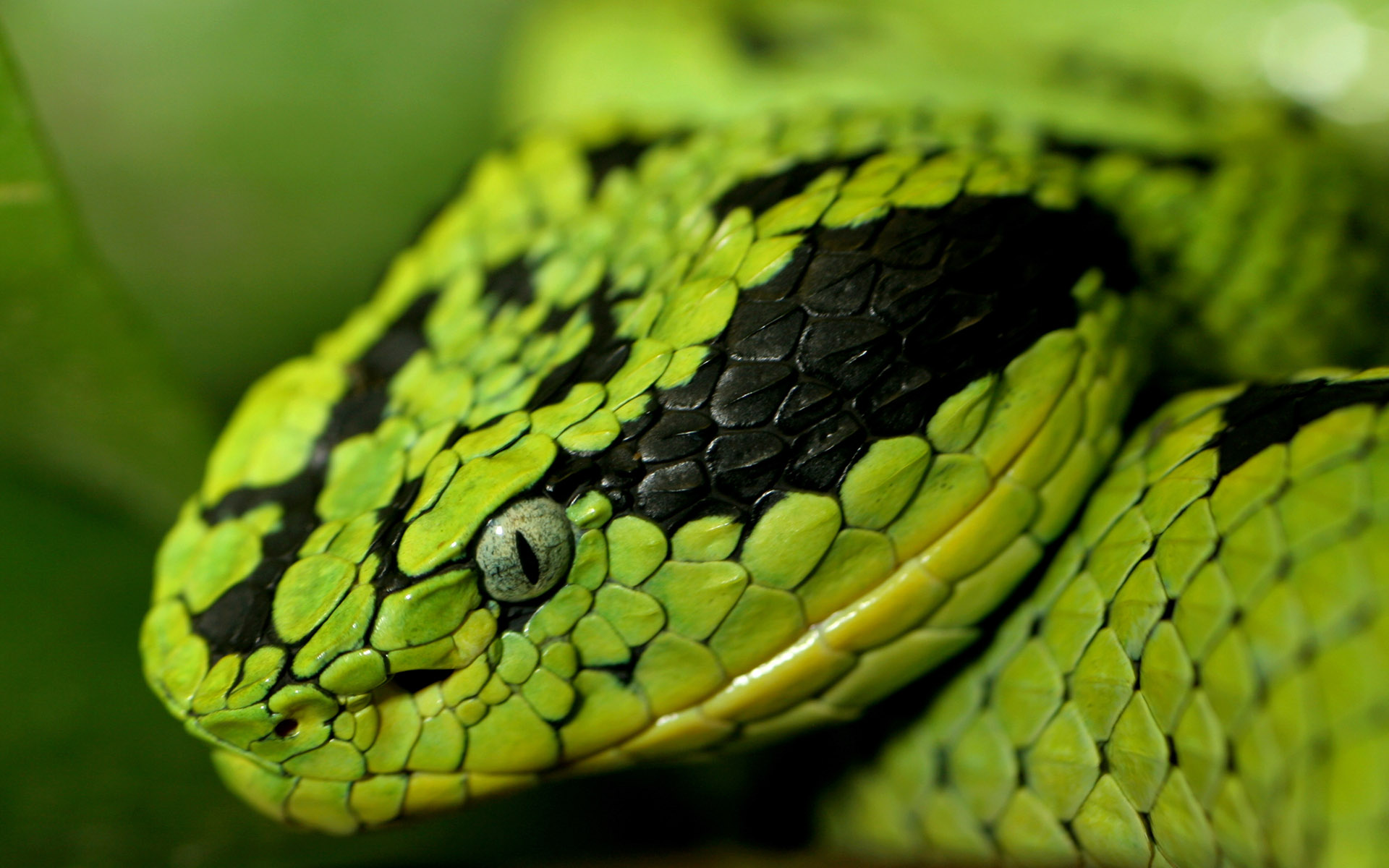 snake pictures download