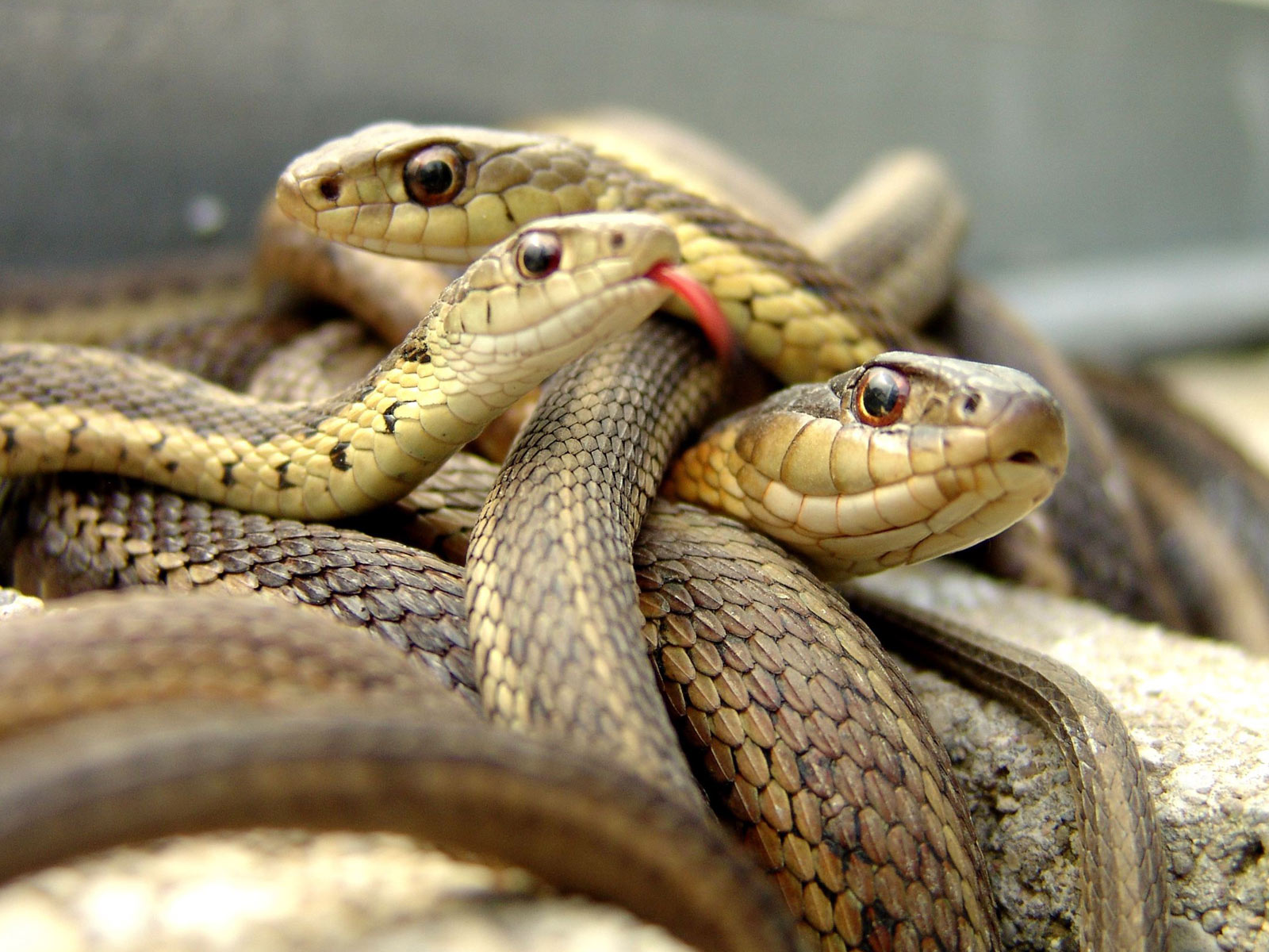 snake pictures hd