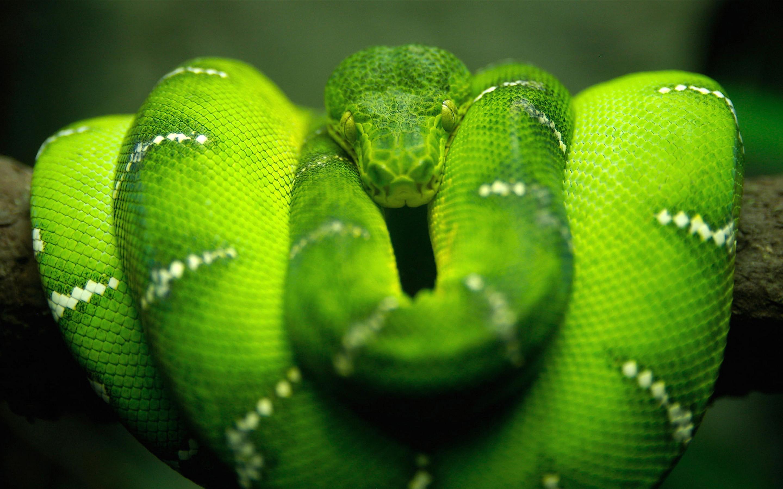 snake wallpaper cute