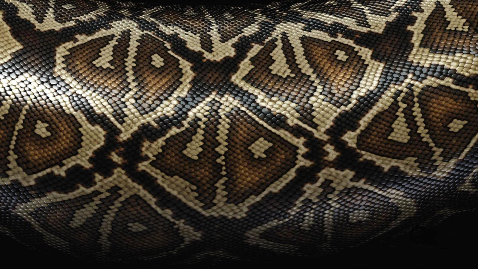 snake wallpaper hd
