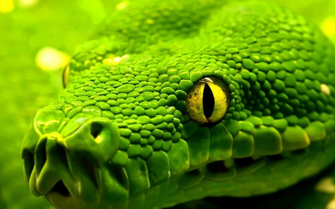 snakes images hd