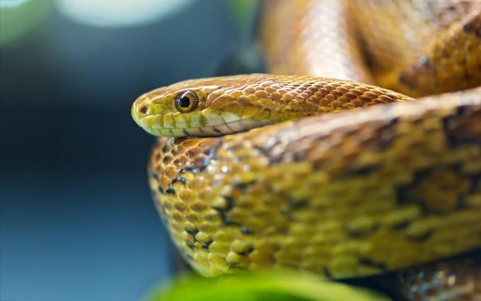 snakes photos hd