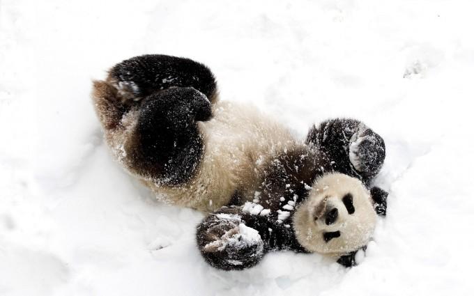 snow animal