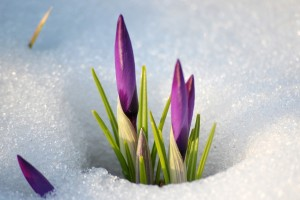 snow flower images