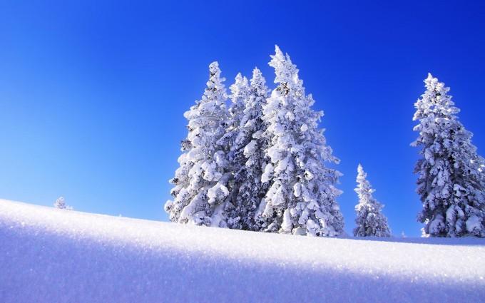 snow hill trees