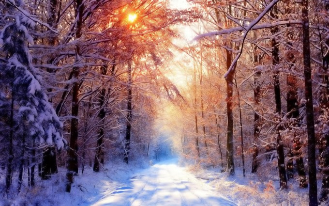 snow pictures forest