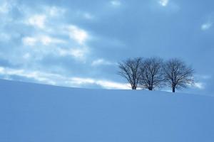 snow tree wallpaper