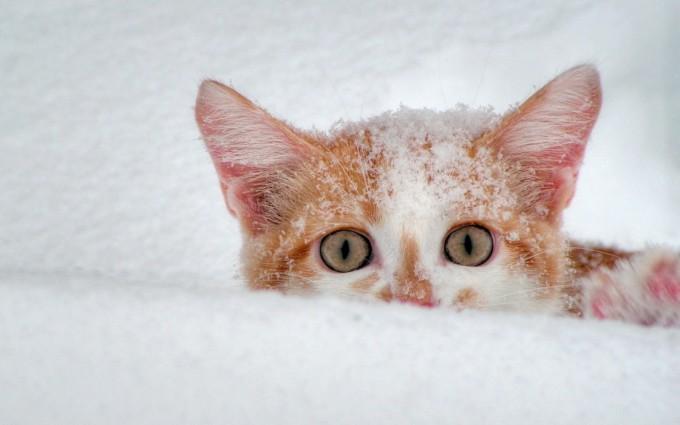 snow wallpaper 1080p